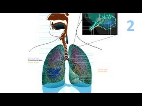 Problem uzależnienia od nikotyny