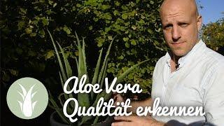 Aloe Vera - gute Qualität erkennen und wie im Markt getrickst wird | als BIODALOE bei MIVITA