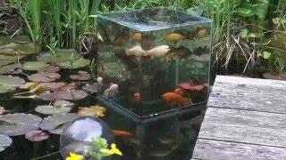 Смотреть онлайн Как построить наружный аквариум в пруду