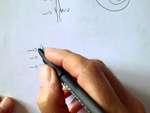 Effetto sildenafil sulla pressione sanguigna
