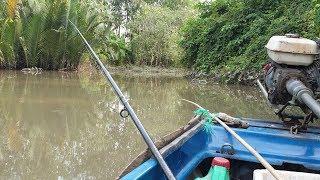 Thử đi câu cá tra sông bằng mồi trùn khổng lồ | Săn bắt SÓC TRĂNG |