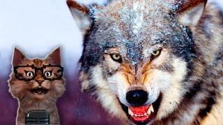 Наука для детей Животные | Волки | Мир животных Хищники