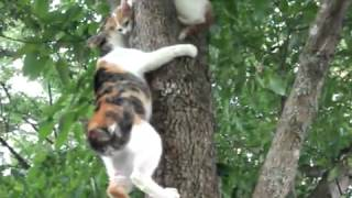 Mama Cat Instructs Kitten on Tree Climbing