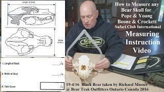 Scoring a Black Bear Skull for P&Y B&C or Safari Club International SCI how to measure