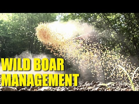 Wild Boar Management