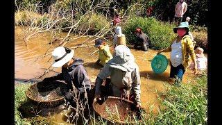 Theo người Đồng Bào miền núi đi xúc Ốc - Hương vị đồng quê - Bến Tre - Miền Tây