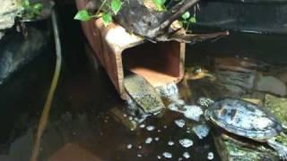 Turtle Pond Update - Part 1