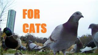 BEST Video for Cats to Watch Squirrels,Bunnies,Pigeons, Birds,