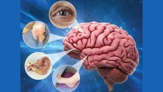Dizziness and Vertigo, Part I - Research on Aging