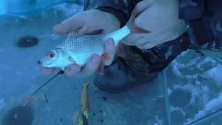 Железногорское водохранилище рыбалка летом