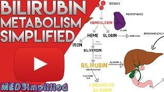 Bilirubin Metabolism Simplified