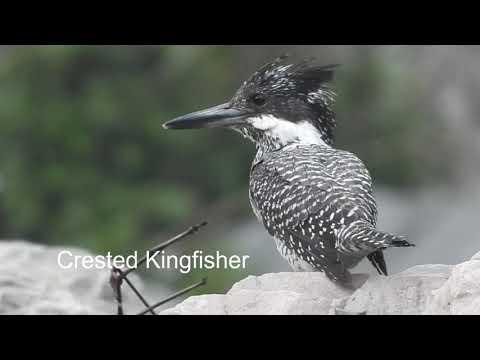 Jageshwar - a birder's paradise