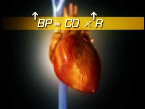 Pour calculer la pression sanguine chez lhomme