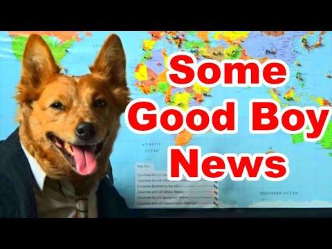 Some Good Boy News (SGN Response)  - Radical Reviewer