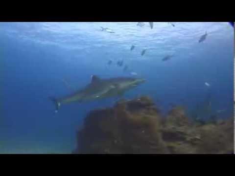 Nautilus Under Sea Liveaboard