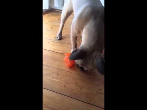 Produkttest Nobby TPR Ball Schwein