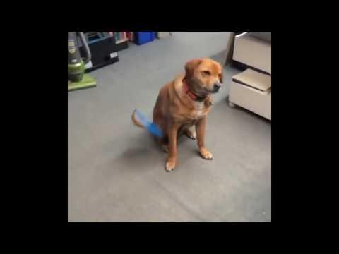 Anteprima Video Cani che non riescono a fare i cani