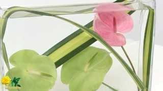 Exposición De Ikebana