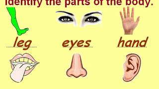 Class 1 EVS Parts of Body for Kids Questions and Answers - Download this Video in MP3, M4A, WEBM, MP4, 3GP