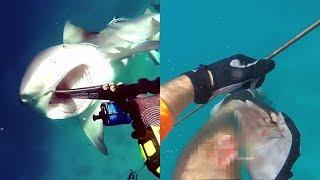 Как Сергей Доля пытается побороть свой страх - боязнь акул?/Премьера на РЕН ТВ/28 января/в 14:00.