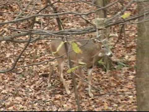 Buffalo County Hunting Video Part 1 with Rutting Ridge Outfitters