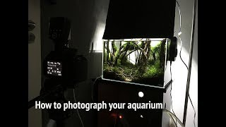 (EN) How to make the best photo of your aquarium