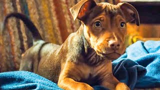 A DOG'S WAY HOME - First 10 Minutes From The Movie (2019)