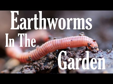 Worm Composting Taking Advantage Of Earthworm Benefits