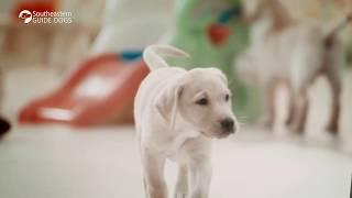 Southeastern Guide Dogs - Sponsor a Puppy