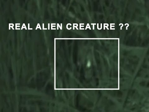 Aliens caught on tape…real footage?? Aliens and ufo sightings videos | Real aliens caught on tape