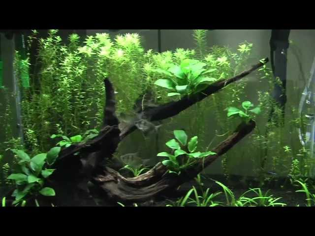 6 Month Aquascape Update and Clean up Crew