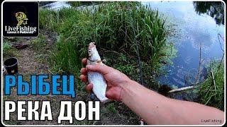 Ловля рыбца на нижнем дону