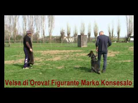Preview video Velsa di oroval