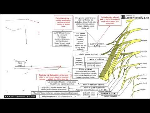 Trattamento dei disturbi della circolazione cerebrale in osteocondrosi cervicale