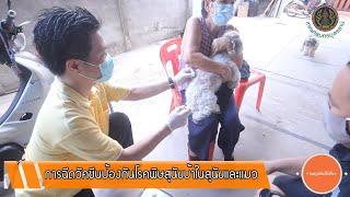 Doดูเมืองให้เห็น EP 19 การฉีดวัคซีนป้องกันโรคพิษสุนัขบ้าฯ