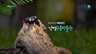 [양평곤충박물관] 홍보영상