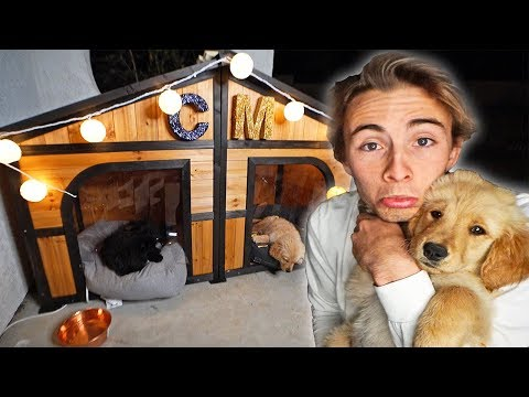 BUILDING MY PUPPY HER DREAM DOG HOUSE!