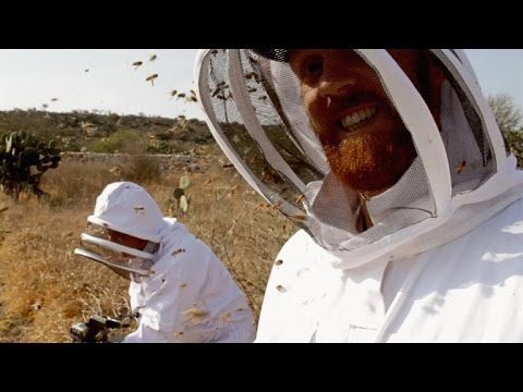 , title : 'A Film Crew Unleashes 40,000 Killer Bees on Itself