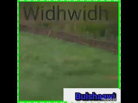 Daawo muuqaal qurxoon widh widh
