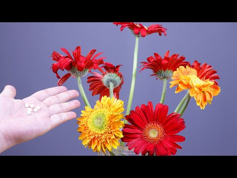 , title : '今天才知道,水中加入一常见物件,鲜花长久保鲜不腐烂,简单有效 Tips for fresh flowers 丨DZtips