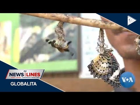 GLOBAL NEWS: New report urges world action to save insects