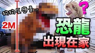 淘寶開箱:當「巨型恐龍」出現在家,狗狗的反應是!!??(CC中字)