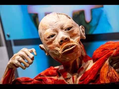 Bodies Revealed exhibit returns to Grand Rapids Public Museum