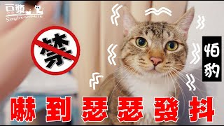 【SoybeanMilk Cat】The Tool that Makes Cats Shiver