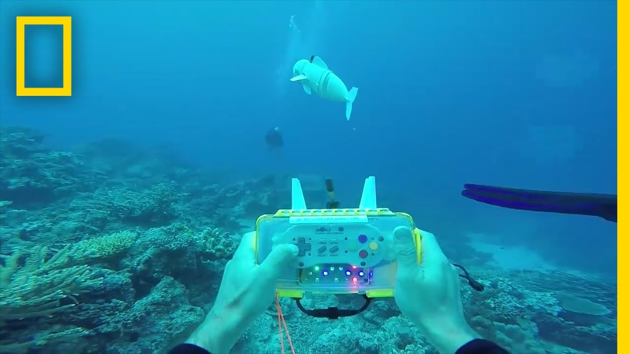 This Wiggly Robotic Fish Could Advance Marine Research | National Geographic thumbnail