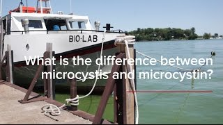 HABs FAQs: What is the difference between microcystis and microcystin?