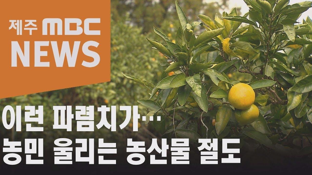 수확철 감귤 절도 기승...'검거 어려워'