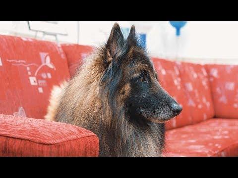 Wie du deinem Hund abgewöhnst, auf das Sofa zu springen!