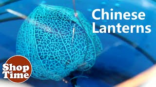 Chinese Lanterns : Dipit# 27