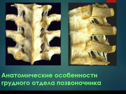 Александр мясников остеохондроз видео